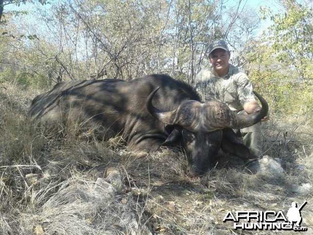 Buffalo taken recently on our Tintshaba concession