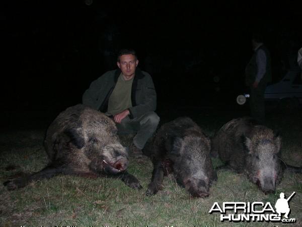 Boar Hunting in Romania