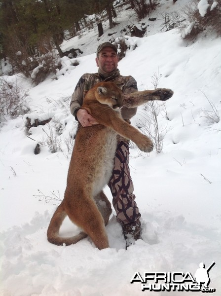 Mountain Lion in BC
