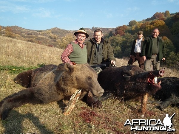 Hunting Brown Bear and Boar in Romania