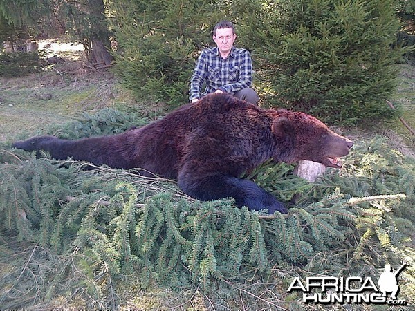 Hunting Brown Bear in Romania