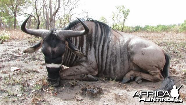 Hunting Nyasaland Gnu Tanzania