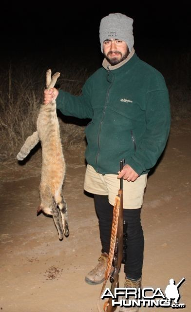 African Wild Cat hunting