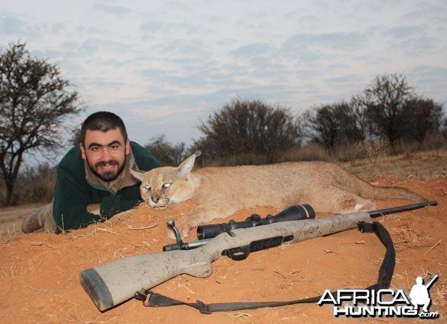 Hunting Caracal