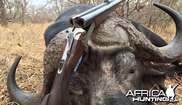 Double rifle- buffalo cow hunt