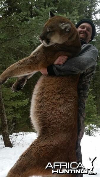 Cougar hunt in British Columbia Canada
