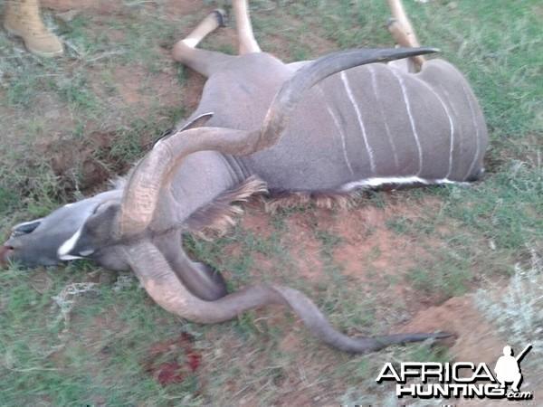 Three Horned Kudu