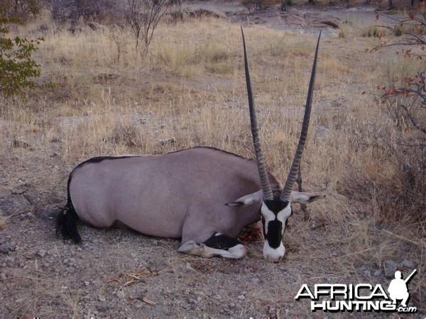 "41"" Female Gemsbok hunted at Westfalen Hunting Safaris Namibia"