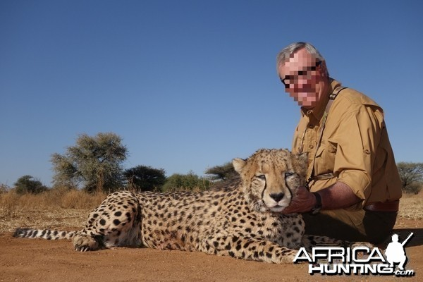 Cheetah hunted at Ozondjahe Hunting Safaris in Namibia