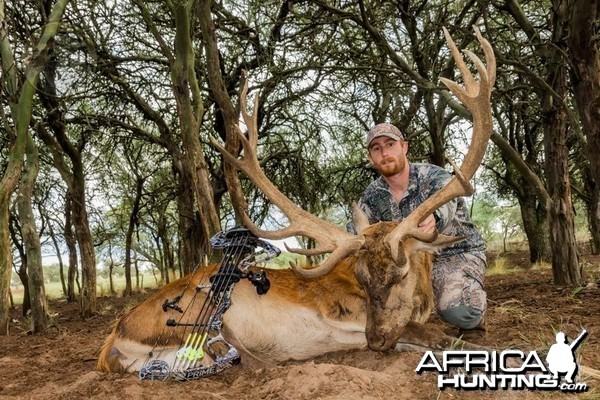 Trophy Red Stag - Poitahue Hunting Ranch