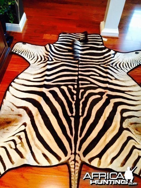 Burchell's Zebra Rug is Finally Complete