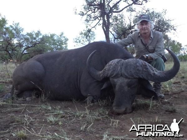 Nile Buffalo