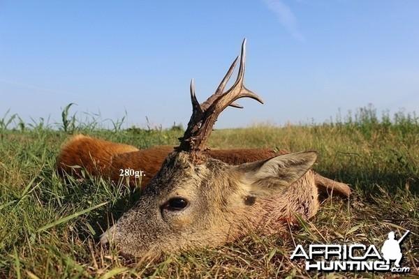 280gr. Roe Deer