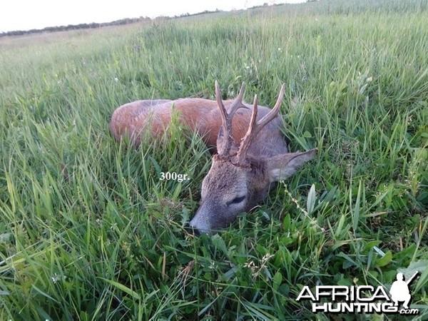 300gr. Roe Deer