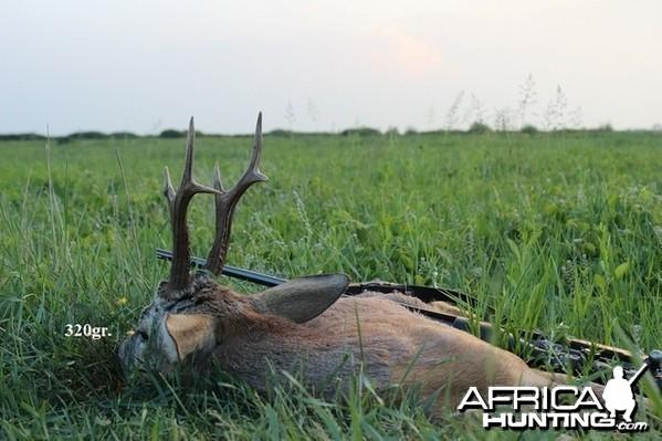 320gr. Roe Deer