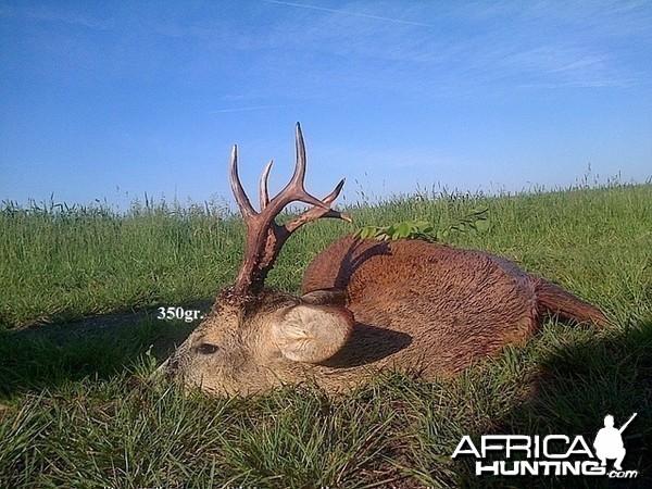 350gr. Roe Deer
