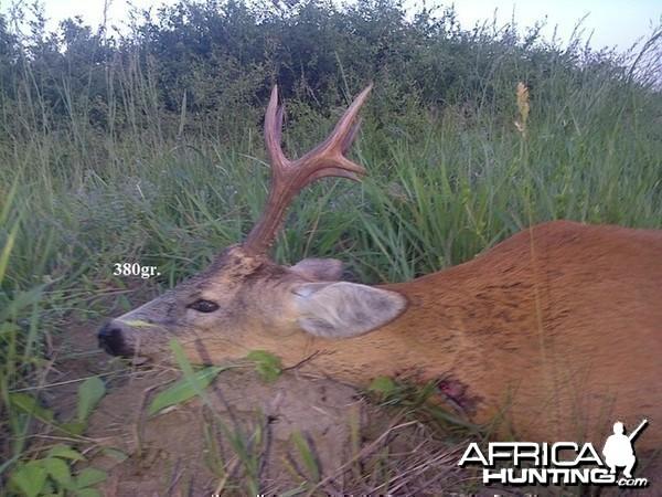 380gr. Roe Deer