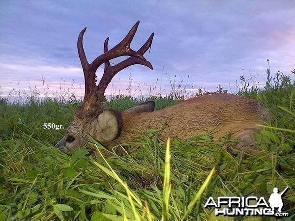 550gr. Roe Deer