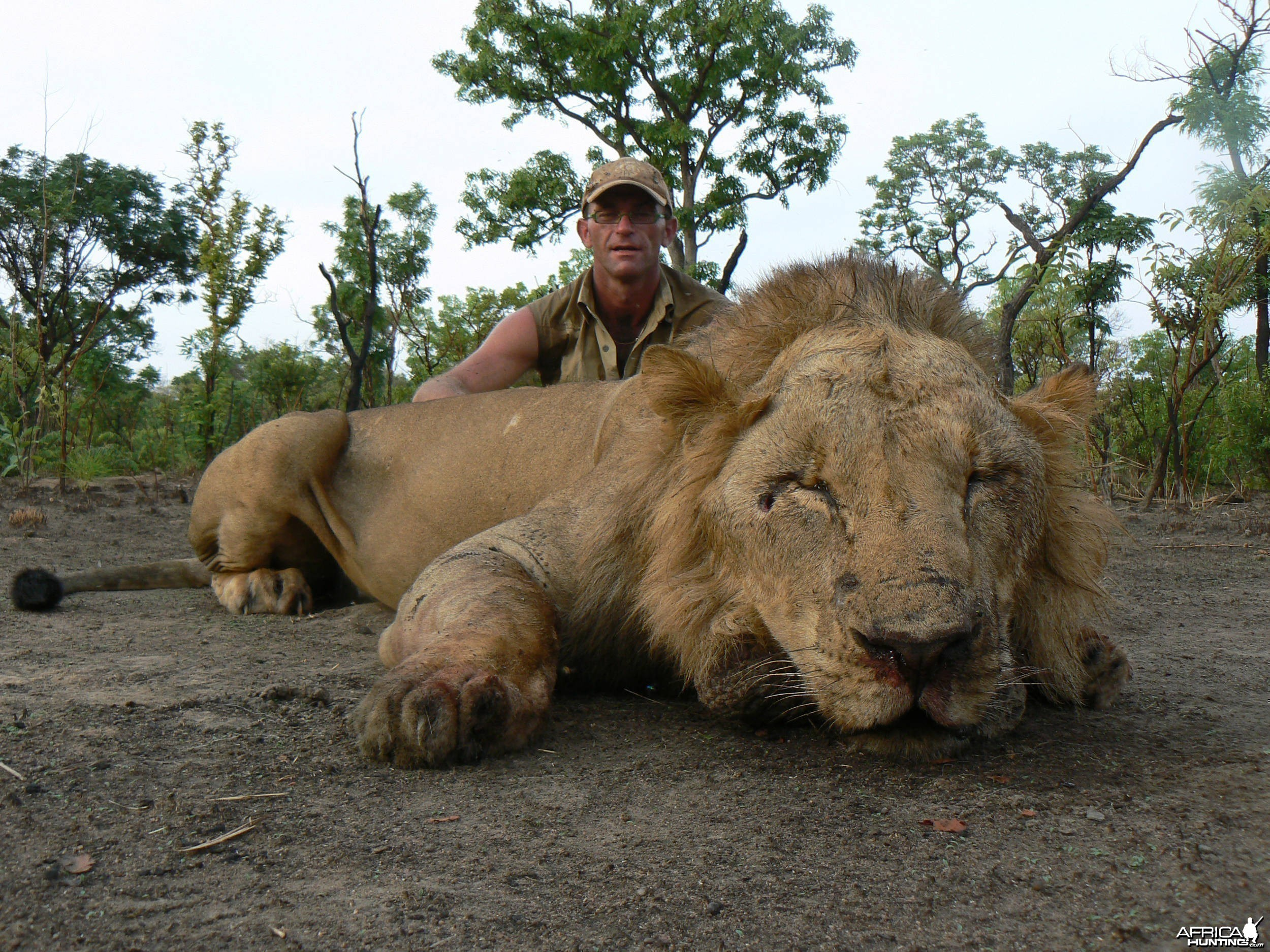 Lion hunt in Central Africa