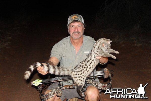 Small-spotted genet cat