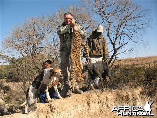 Hunting Serval in South Africa
