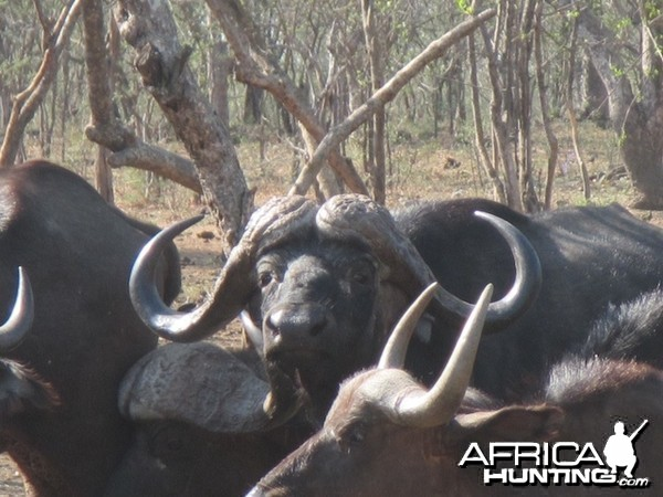 Spear Safaris