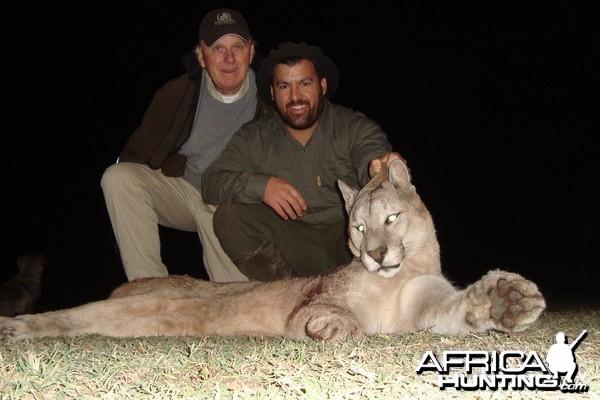 Puma Hunted in Argentina