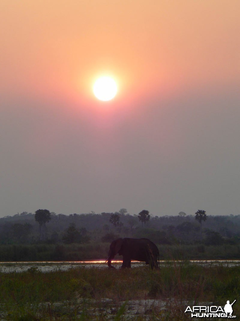 Elephant bull in the sunset - Selous Tanzania