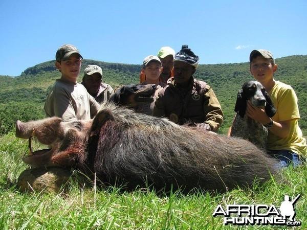 Bushpig hunting with hounds - Mankazana Valley