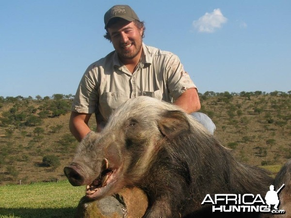 Bushpig hunting with hounds - Mankazana Valley