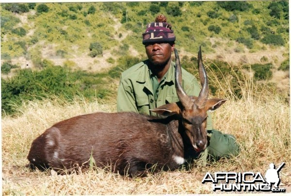 Bushbuck - Free range Mankazana Valley