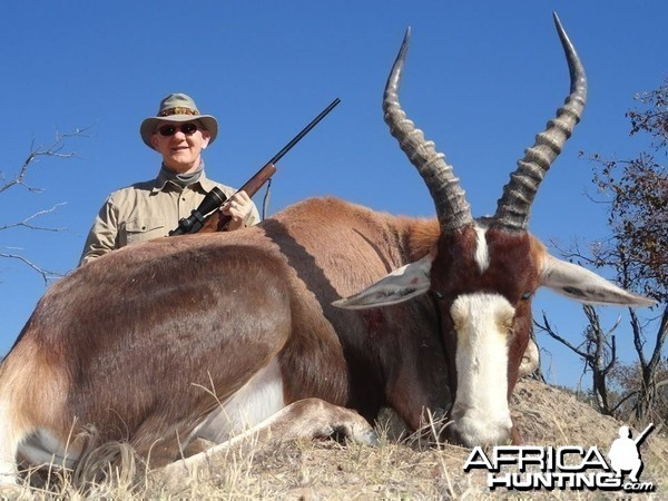 Limpopo Province Blesbuck