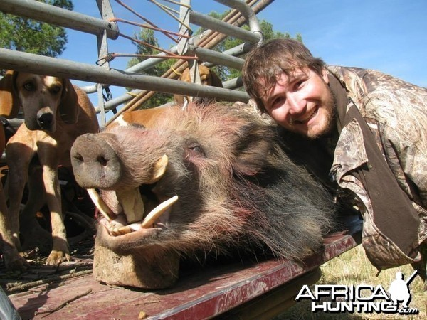 Rowland Ward bushpig from Eastern Cape