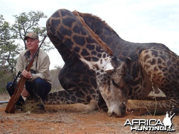 Giraffe hunted with Lianga Safaris