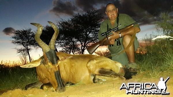 Red Hartbees - Kalahari RSA