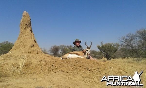 Springbok 15 3/4 inches