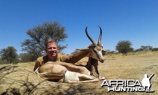 Springbok 14 1/4 inches
