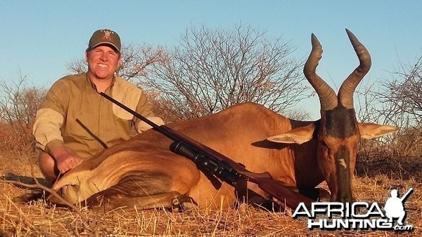 Red Hartebeest 20 inches