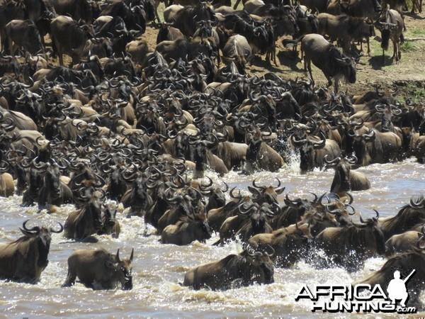 Serengeti with Wayne Williamson