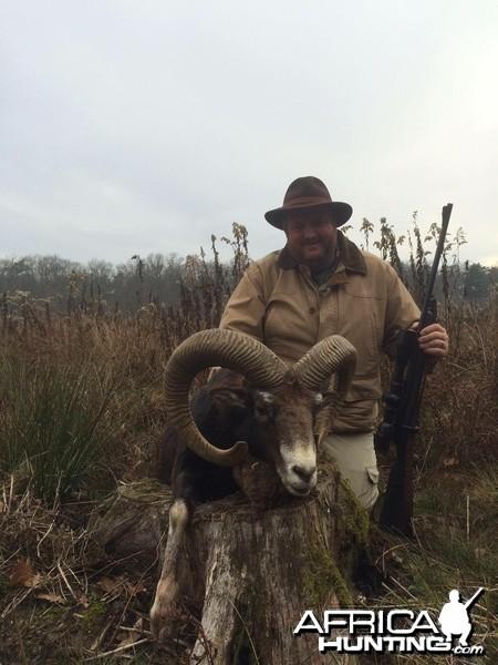 Mouflon Austria