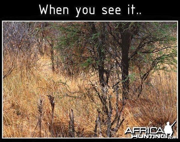 put on your 'bush' eyes...