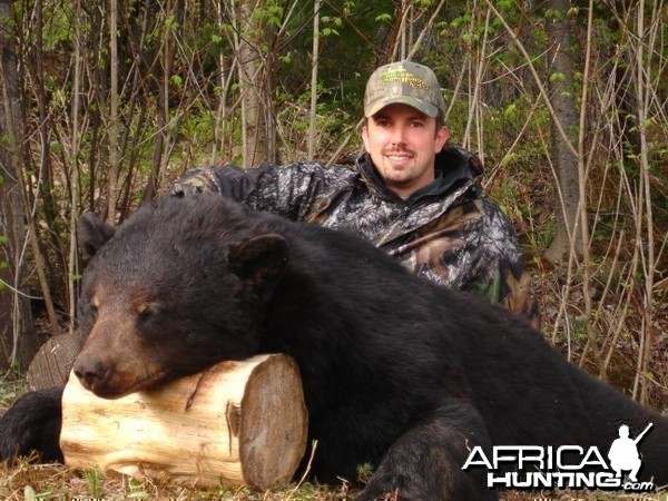 330 pound black bear shot in Quebec in May 2008