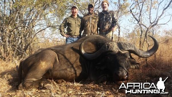 45 inch Buffalo