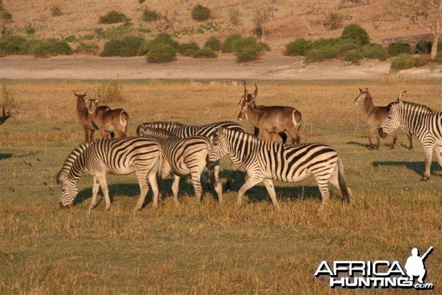 Classic Safaris in Caprivi Namibia