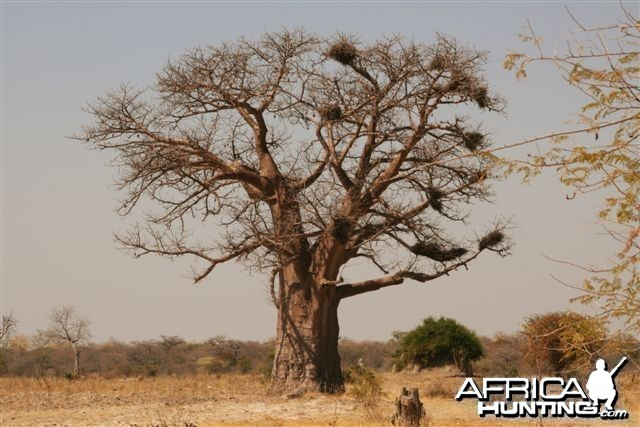 Quintessential Africa