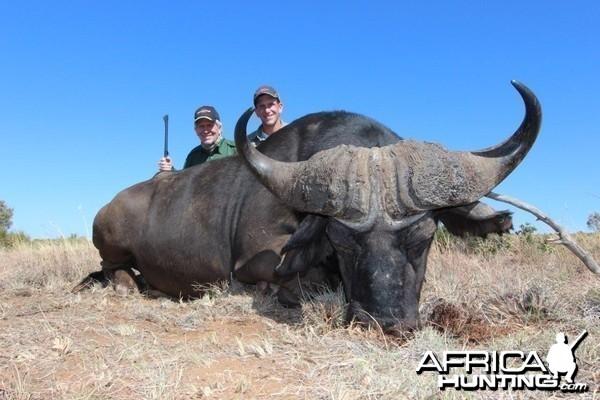 Sandymount buffalo
