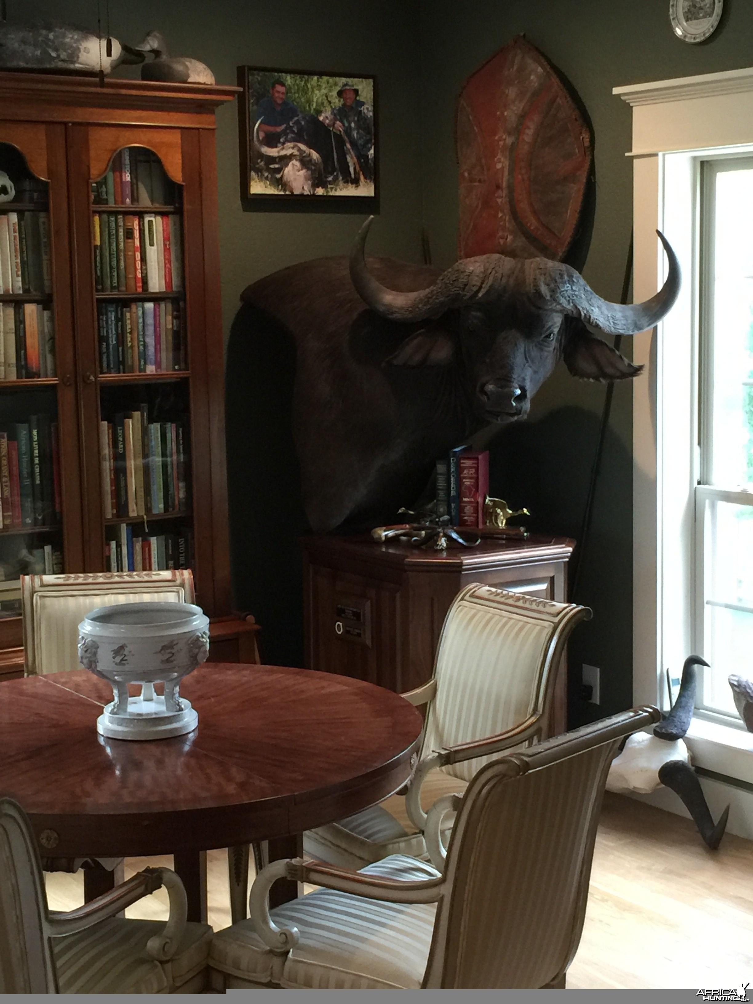 Caprivi Buffalo