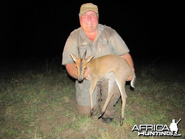 East African Bush Duiker Hunted in Uganda