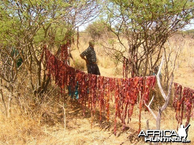 Poachers caught in the bush with drying meat - Namibia