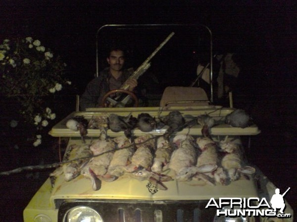 Hunting Rabbits in Pakistan